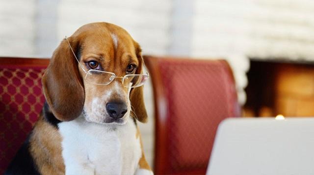 Самые умные породы собак. 14328.jpeg