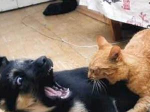 Какую собаку лучше завести в квартире с котом