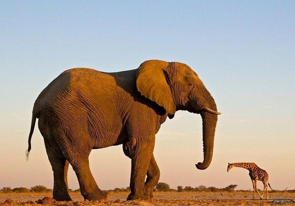 Мир должен знать, чтоест слон – пишет Катя Андреева в инстаграм. 14551.png