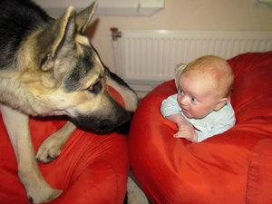 Подарите малышу лучшего друга. 9589.jpeg