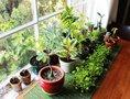 Удобряем домашние растения