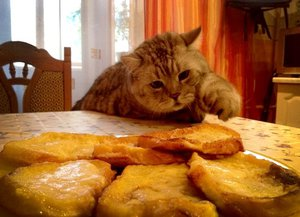 Какие продукты с домашнего стола можно давать кошке